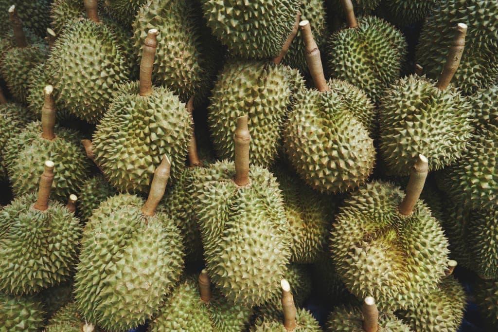 Die Durian, Könnt der Früchte, ist nicht jedermanns Sache. In Mindanao gibt es die besten Früchte der Philippinen.
