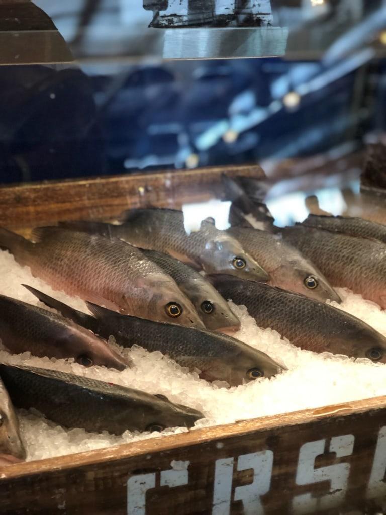 Eisgekühlter Fisch in Auslage auf den Florida Keys