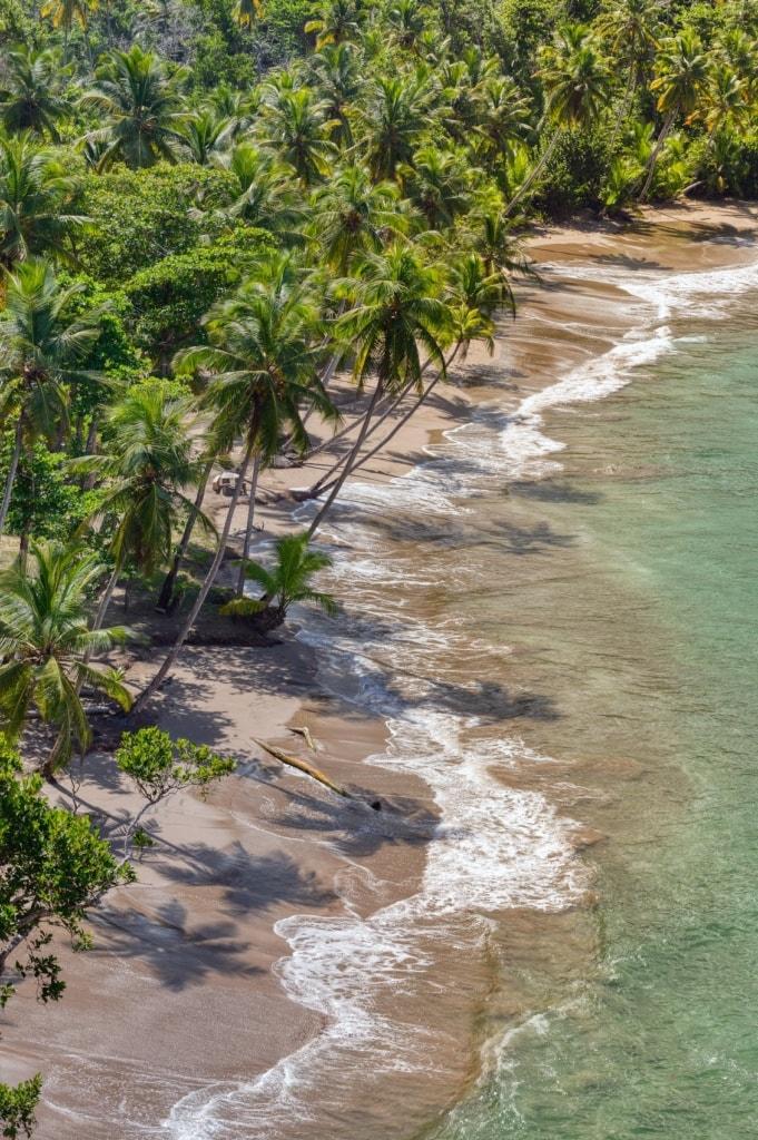 Die Natur Dominicas ist eine Schatzkammer der Natur.