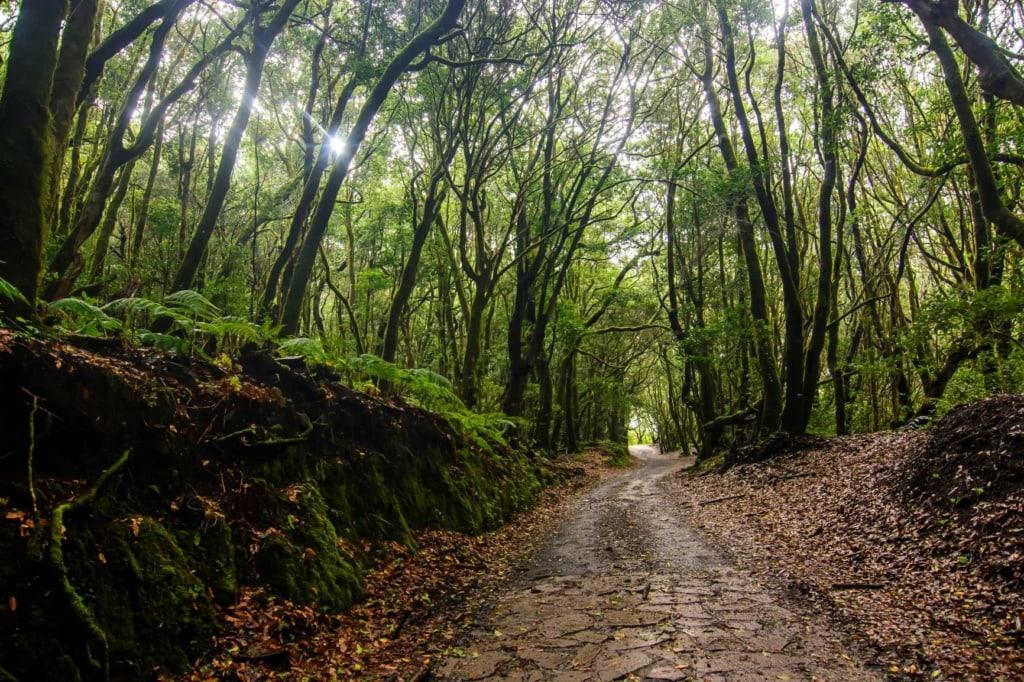 Wanderweg Nationalpark Garajonay