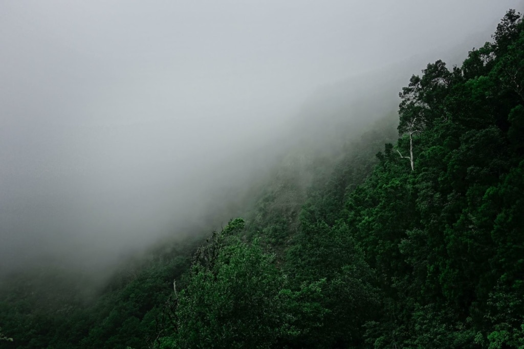 Nebelschwaden auf La Gomera