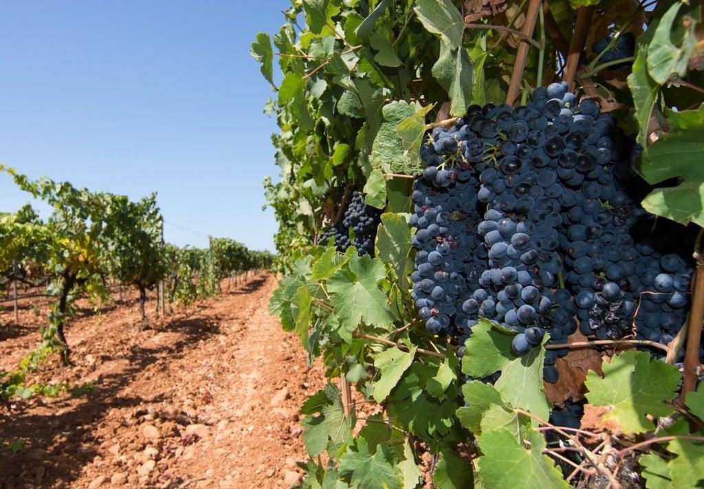 Mallorcas Weingüter laden zum Verkosten ein.