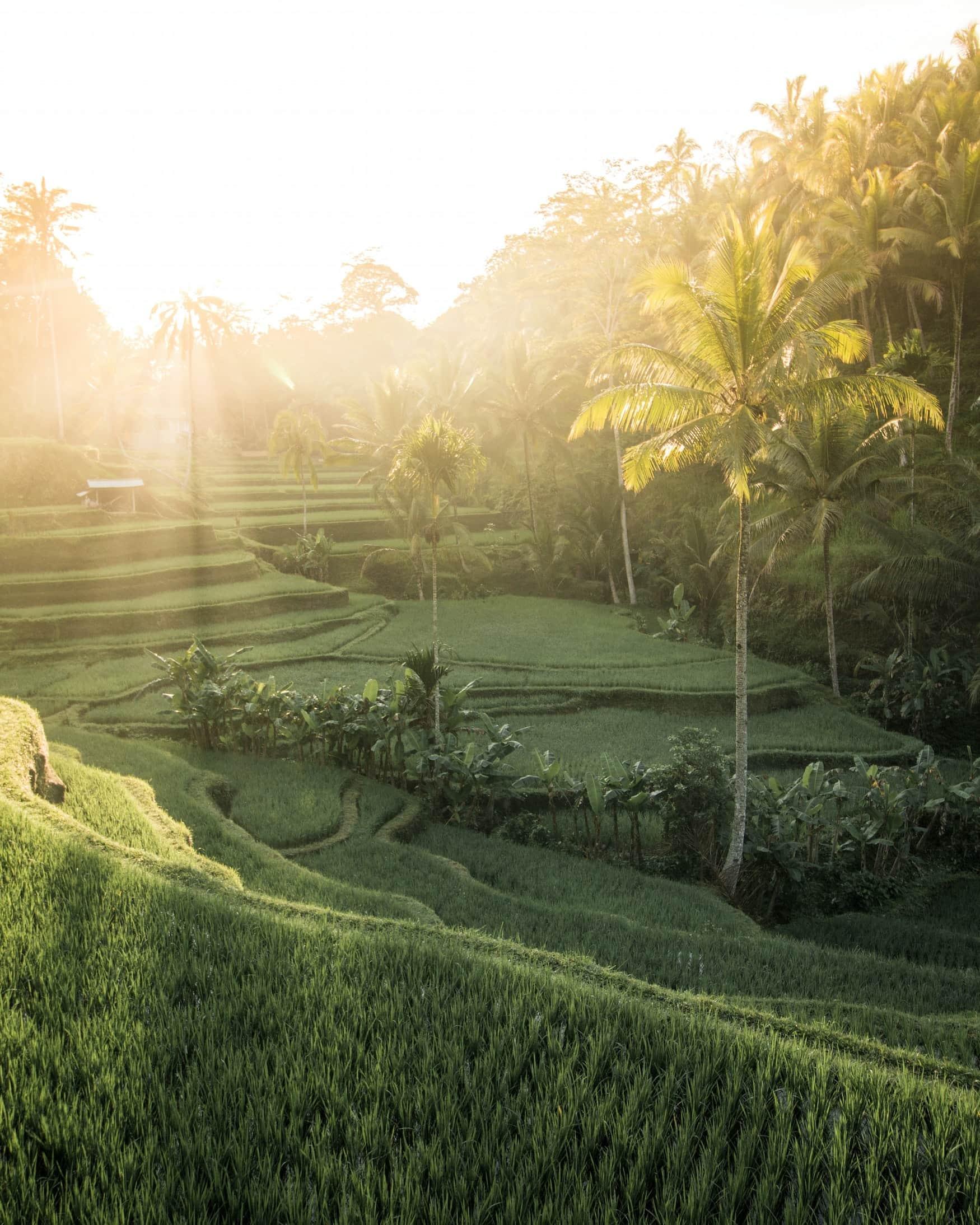 Bali Filmkulisse