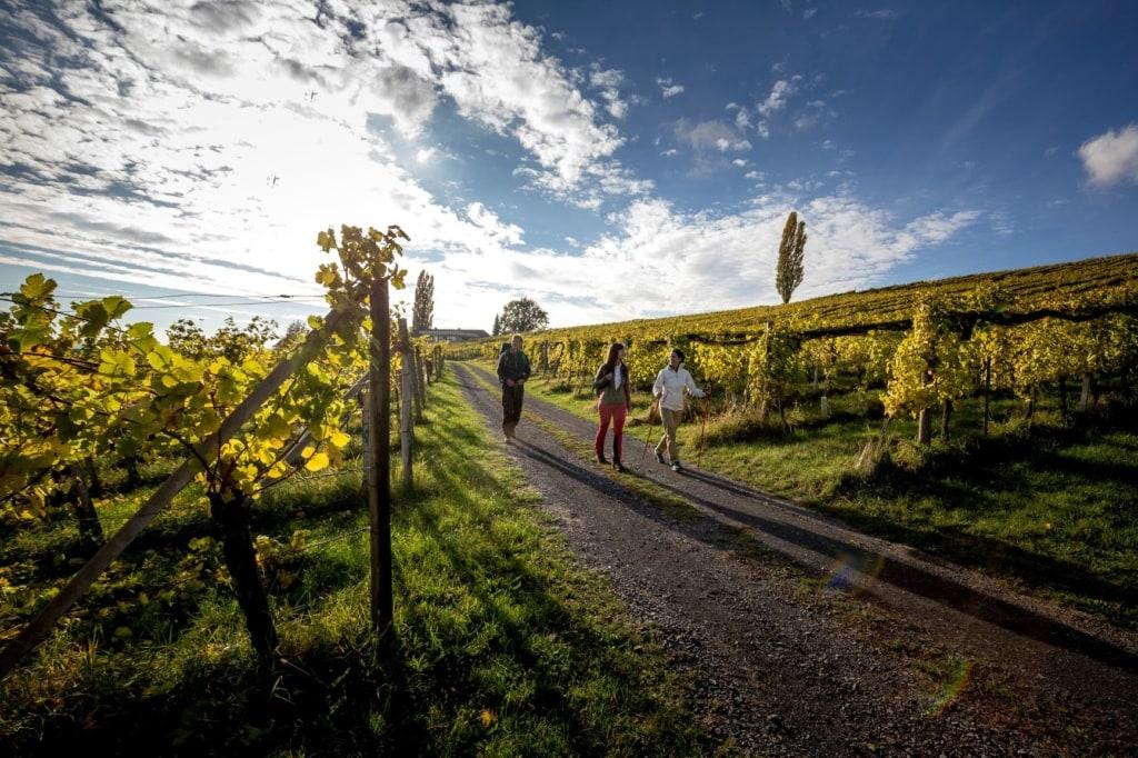 Wein- und Apfelgärten in der Steiermark
