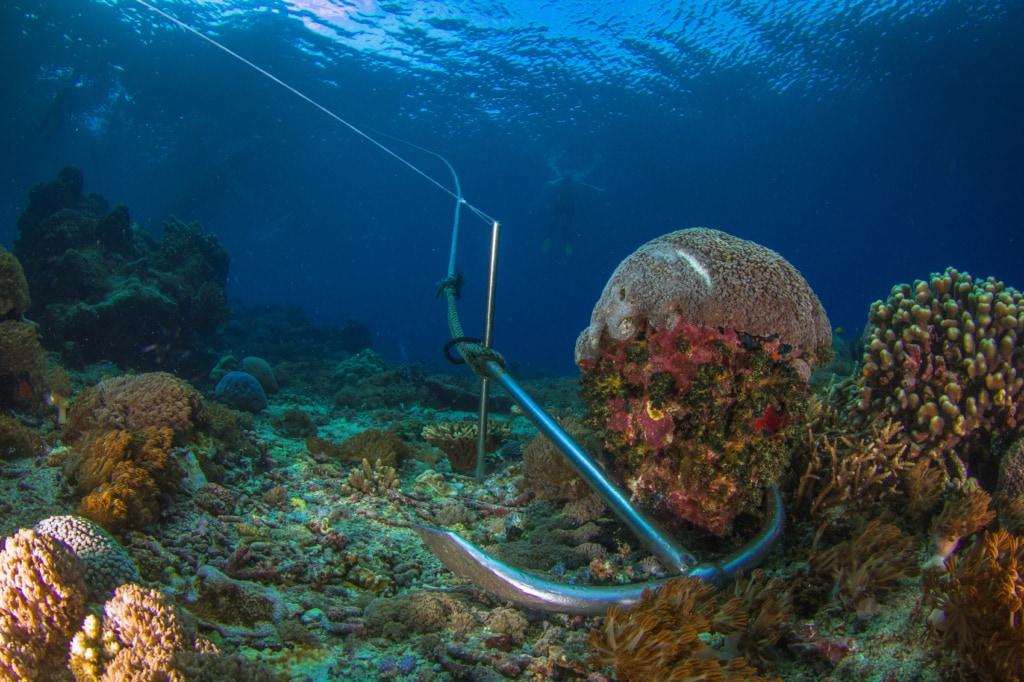 Anker können Korallenriffe nachhaltig zerstören.