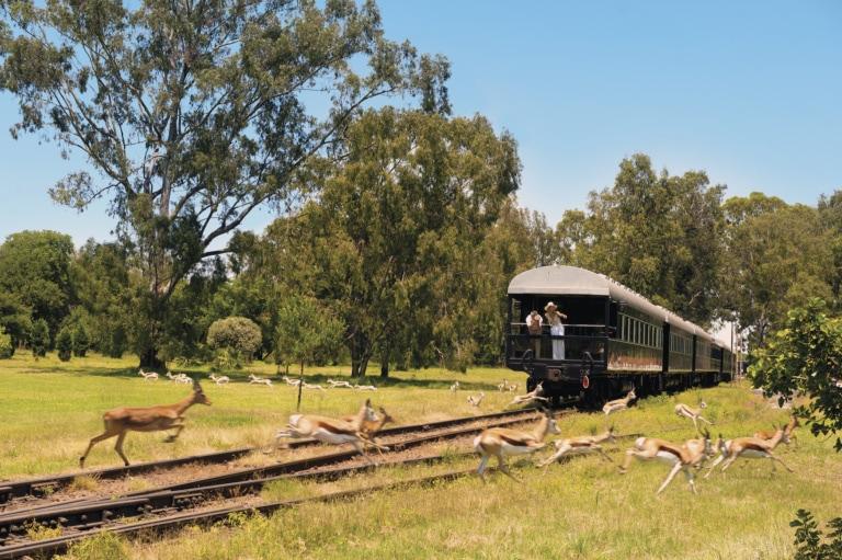 Zug fährt durch afrikanische Landschaft. Frau steht auf Aussichtsplattform des Zuges und beobachtet Tiere.