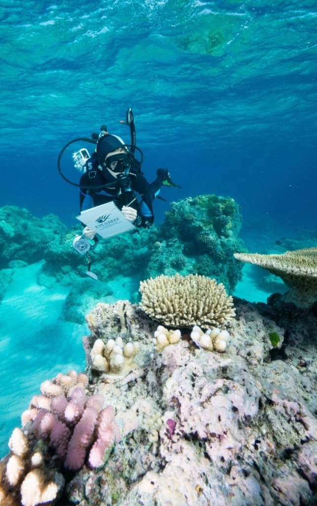 Beim Eye on the Reef Programm können Urlauber selbst zu Meeresschützern werden.
