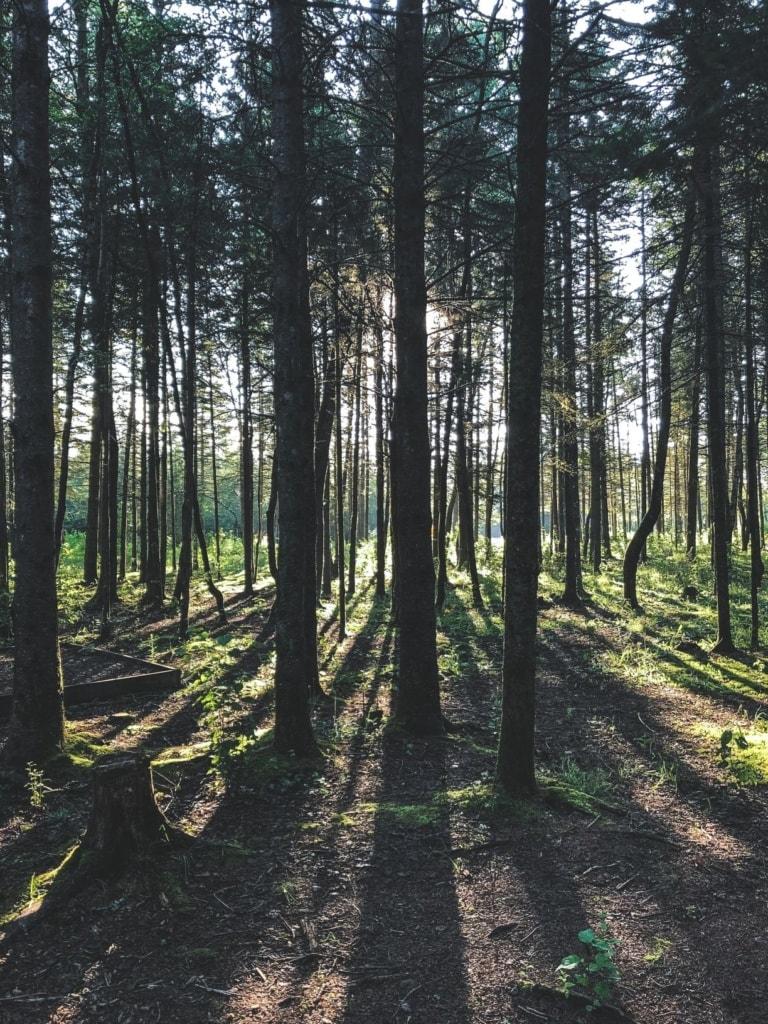 Blick in dichten Wald