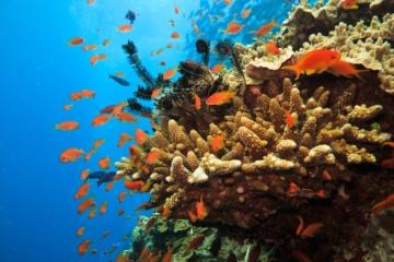 Das Great Barrier Reef ist eines der am geschütztesten Riffe der Welt.