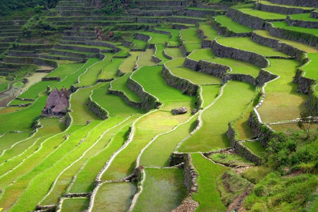 Eine der schönsten Unesco Welterbestätten auf den Philippinen sind die Reisterrassen von Banaue.