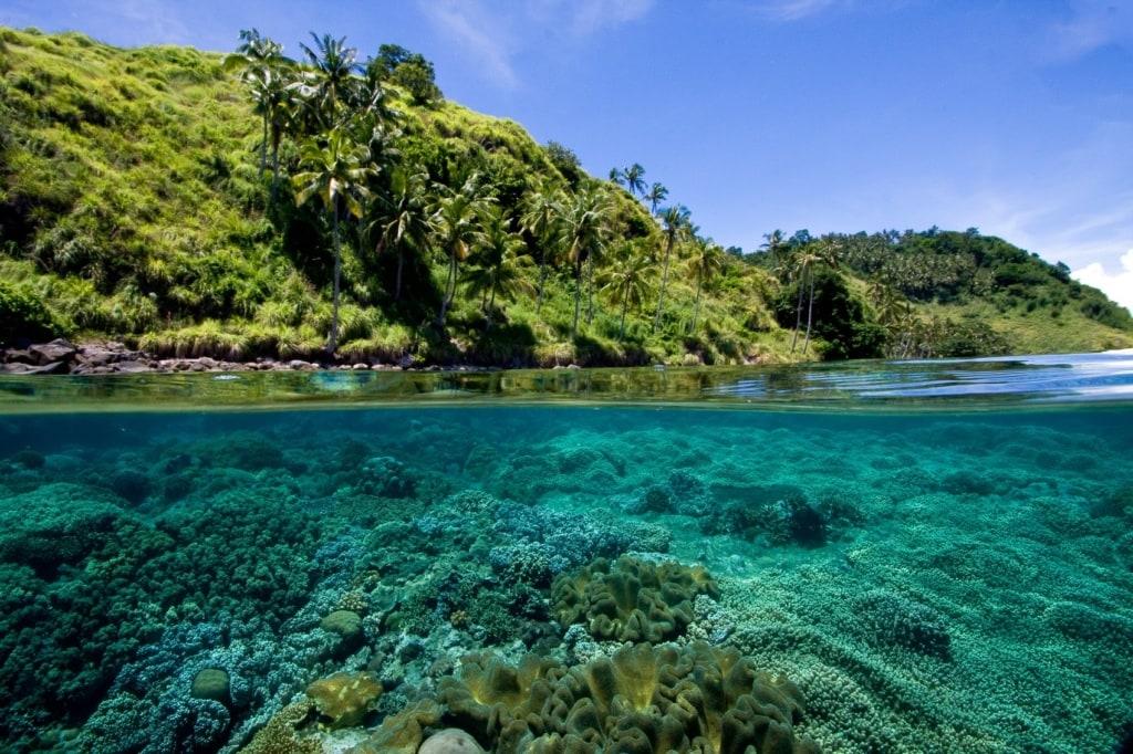 Wer die Philippinen nur von oberhalb der Wasseroberfläche gesehen hat, hat nur die Hälfte von ihnen gesehen.