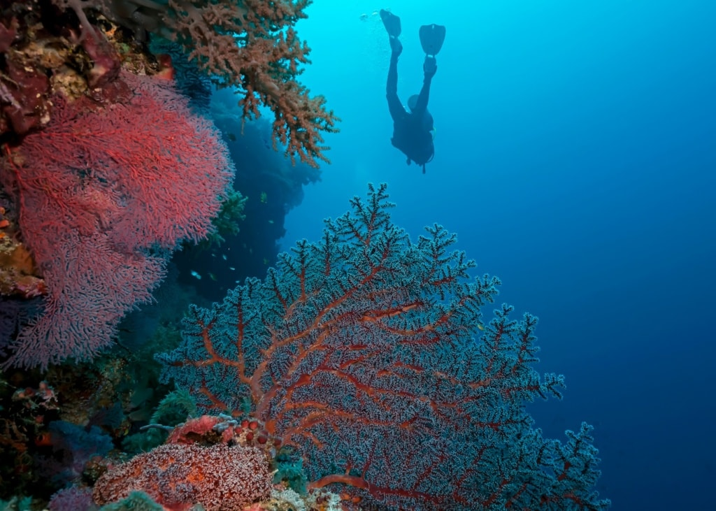 Das Tabbutaha-Riff auf den Philippinen ist eines der Unesco Welterbestätten des Inselparadieses.