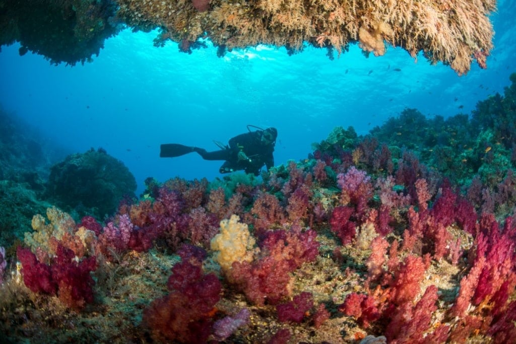 Taucher entdeckt Korallenwelt Fijis