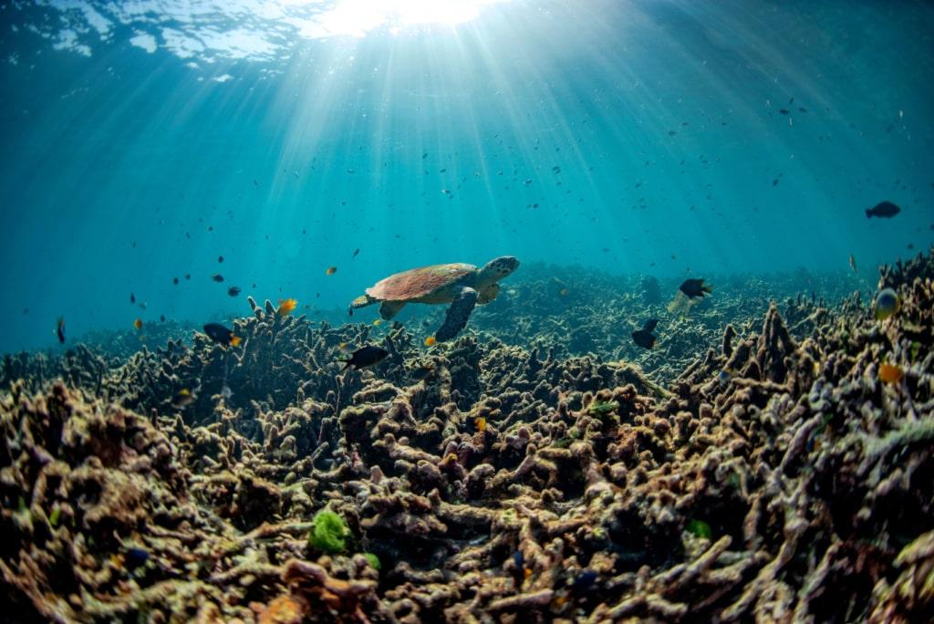 Erwärmt sich die Temperatur der Meere langfristig, sterben Korallen ab.
