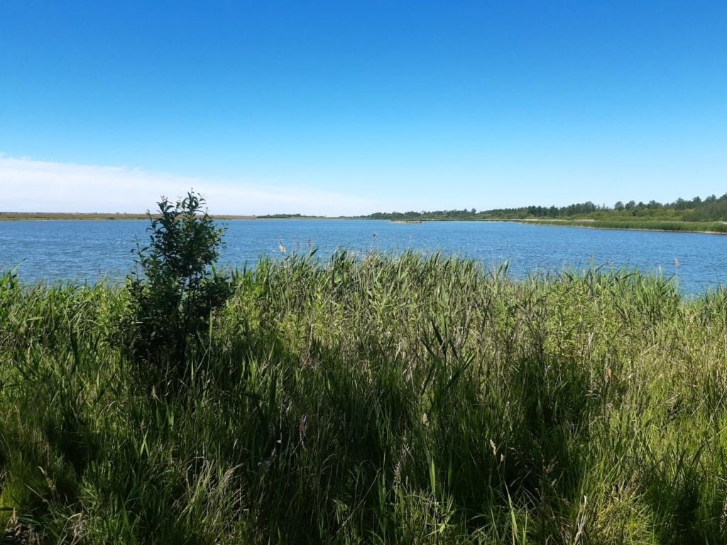 Landschaft im Kattinger Watt