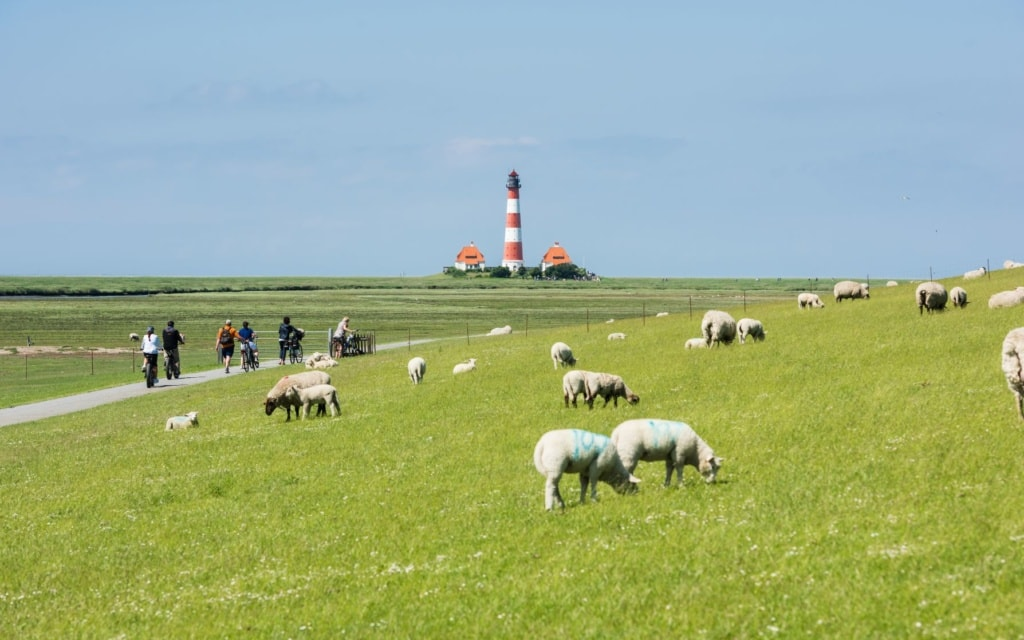 Schafe auf einer Wiese an der Nordsee