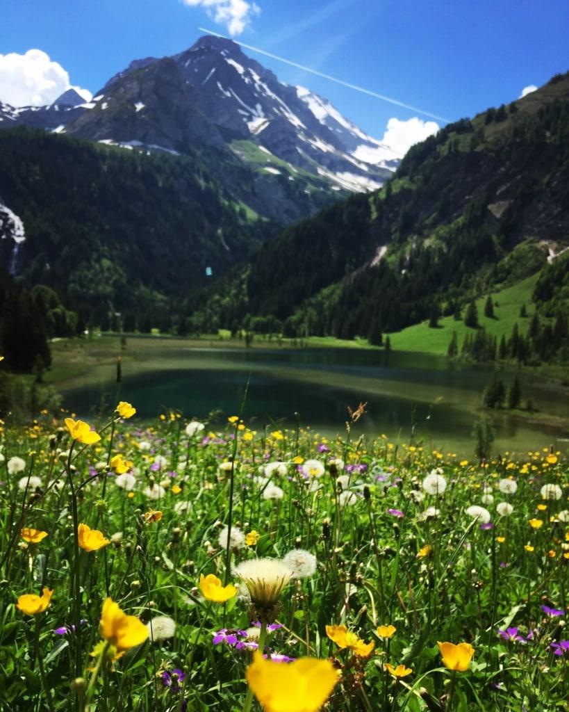 Die Berge im Berner Oberland in der Schweiz sind im Frühjahr besonders magisch.