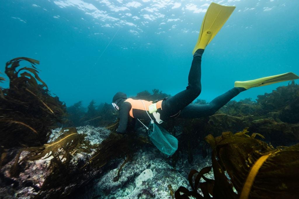 Frau taucht nach Meeresfrüchten ohne Pressluftflasche