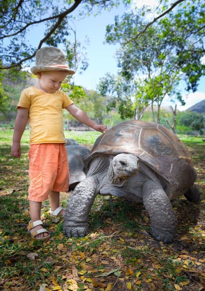 Kind streichelt Riesenschildkröte