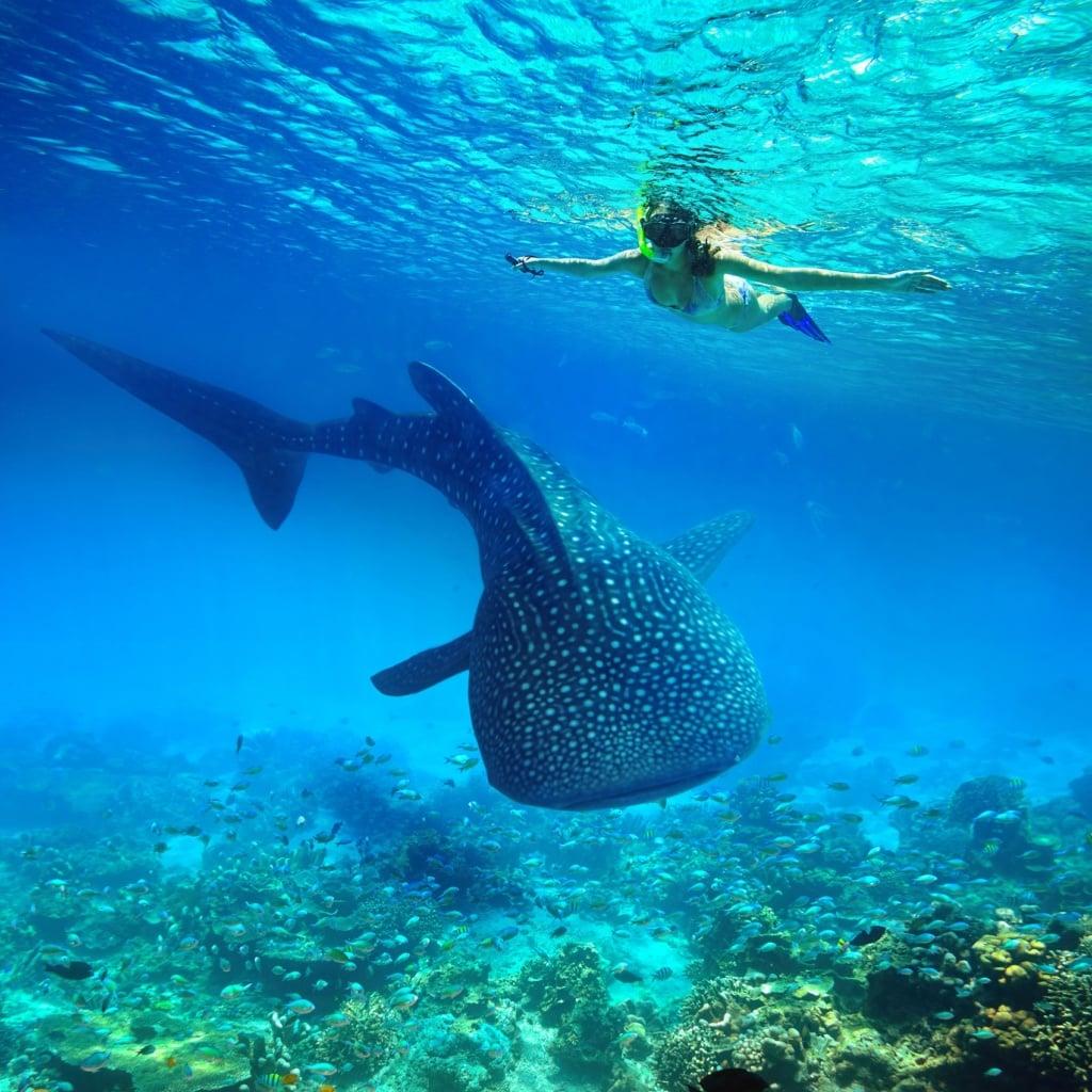 In Südleyte lässt es sich prima mit Walhaien schnorcheln.