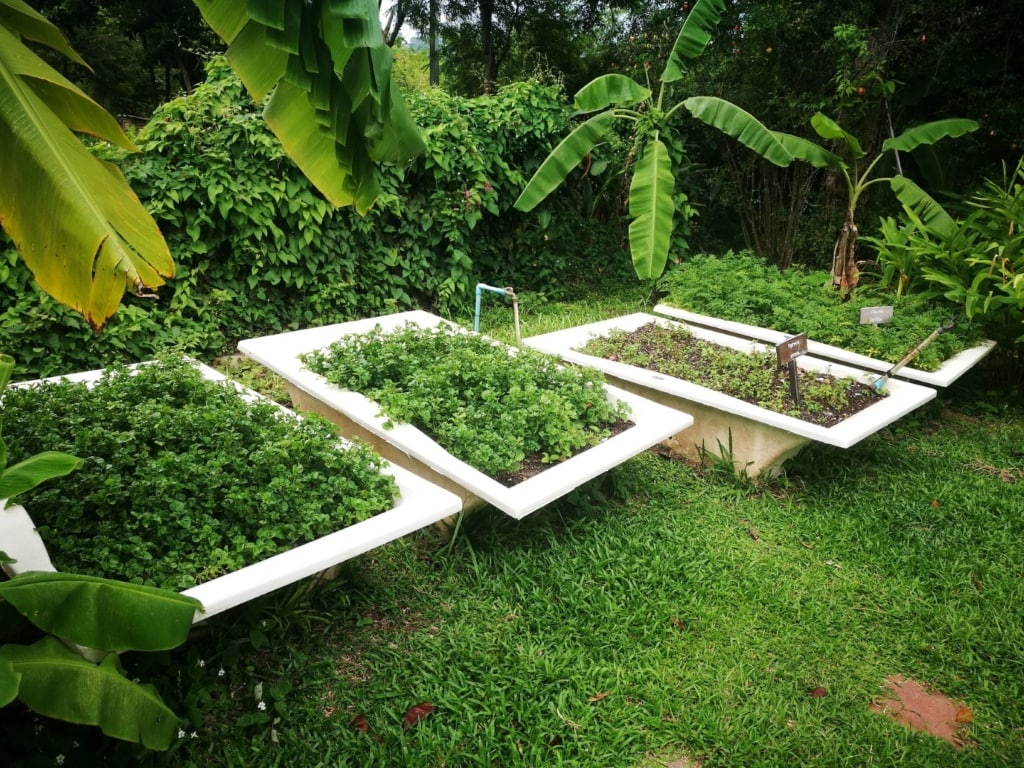 The Tongsai Bay-organic garden