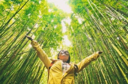Touristenwanderer im Bambuswald