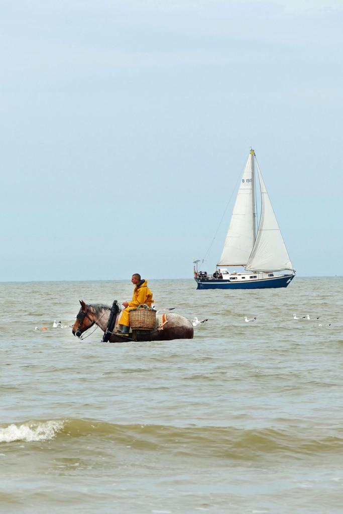 Pferd mitten im Meer zum Krabbenfischen