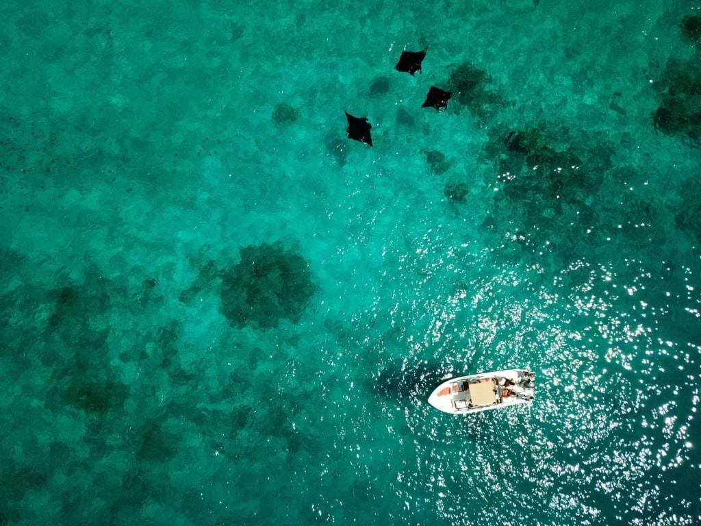 Boot und Mantas auf den Malediven aus der Luft fotografiert