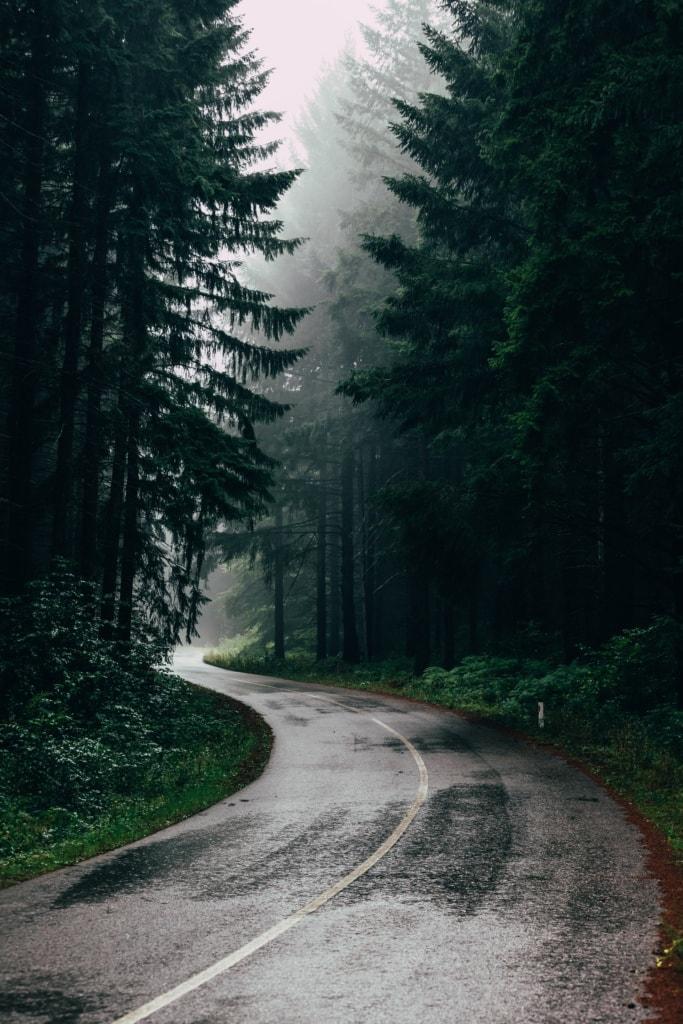 Straße führt durch Wald, Regen