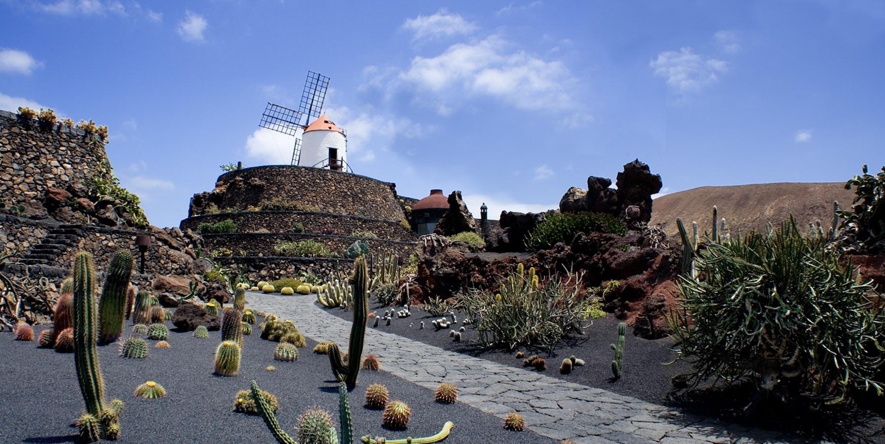 Kakteen so weit das Auge reicht im Jardín de Cactus auf Lanzarote