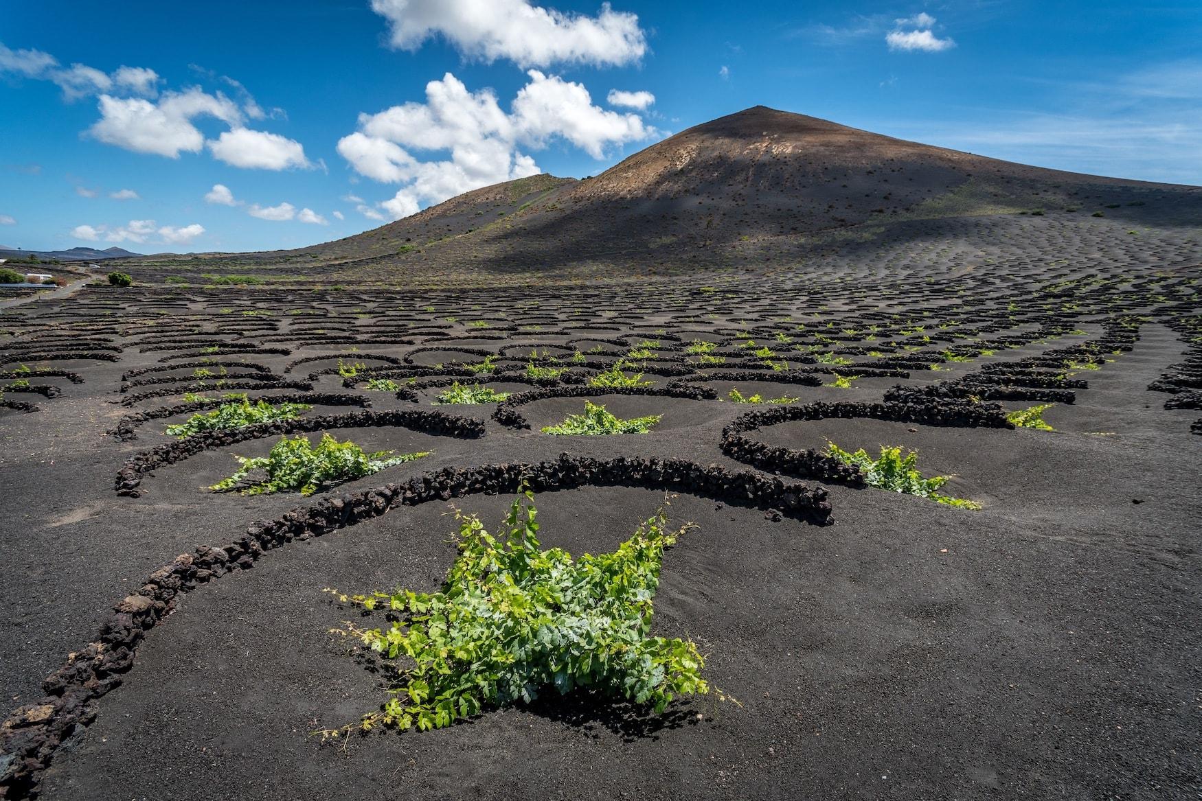 Weinanbaugebiet auf Lanzarote zwischen Lavafeldern