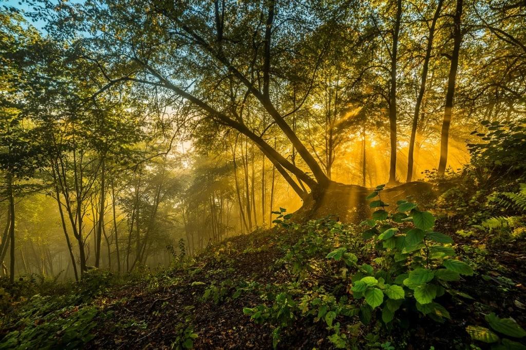 Laimonas Ciūnys Forest