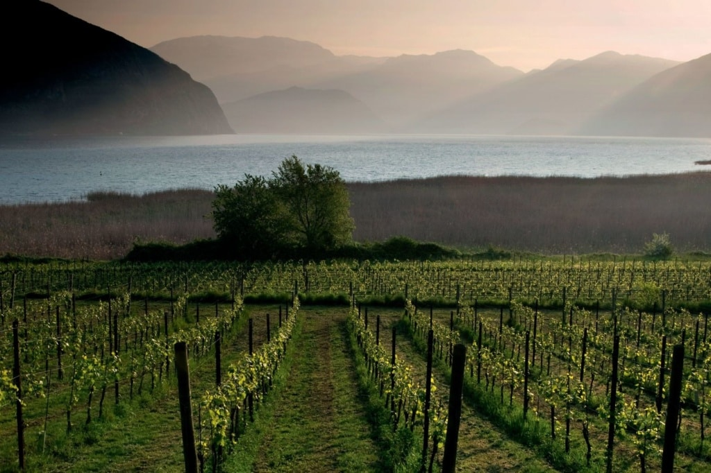 Weinanbau in der Franciacorta