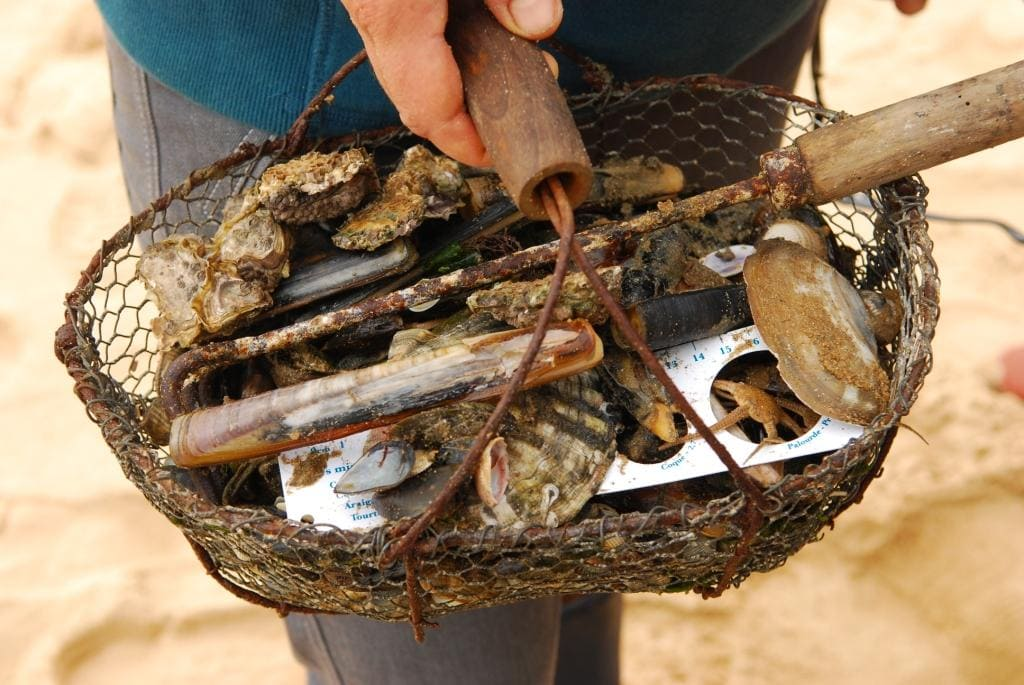 Person hält Korb nach Fischerei