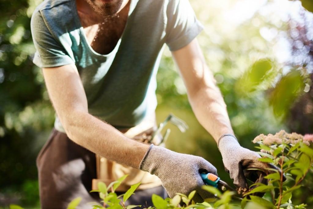 Mann arbeitet im Garten und schneidet Pflanzen