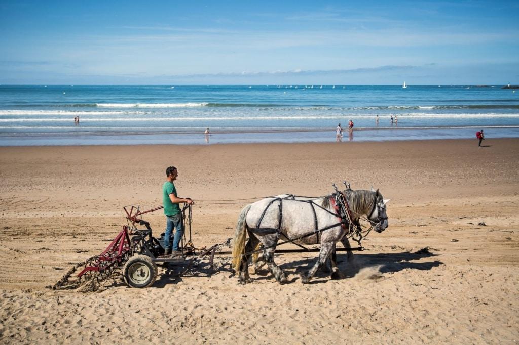 Umweltschutz an Frankreichs Atlantikküste: Strandreinigung mit Pferden