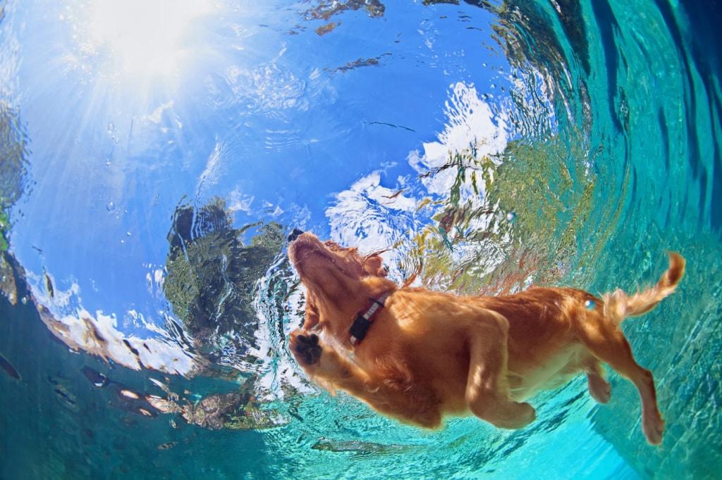 Eine Runde schwimmen gehen – der Urlaub mit Hund sollte gut geplant sein.