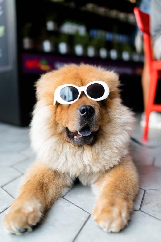 Dress to impress – Urlaub mit Hund ist besser geplant.