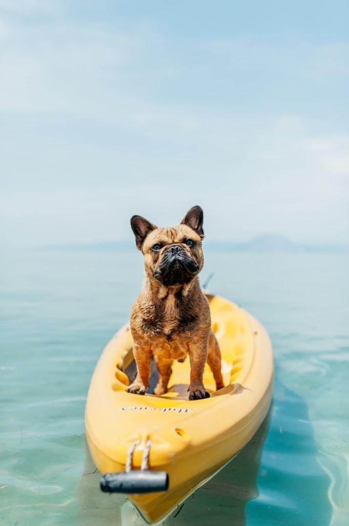 Auch Hunde brauchen Urlaub!