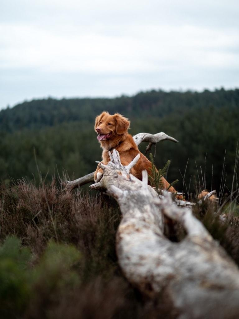 In der Natur ist es eben am schönsten bei einem Urlaub mit Hund.