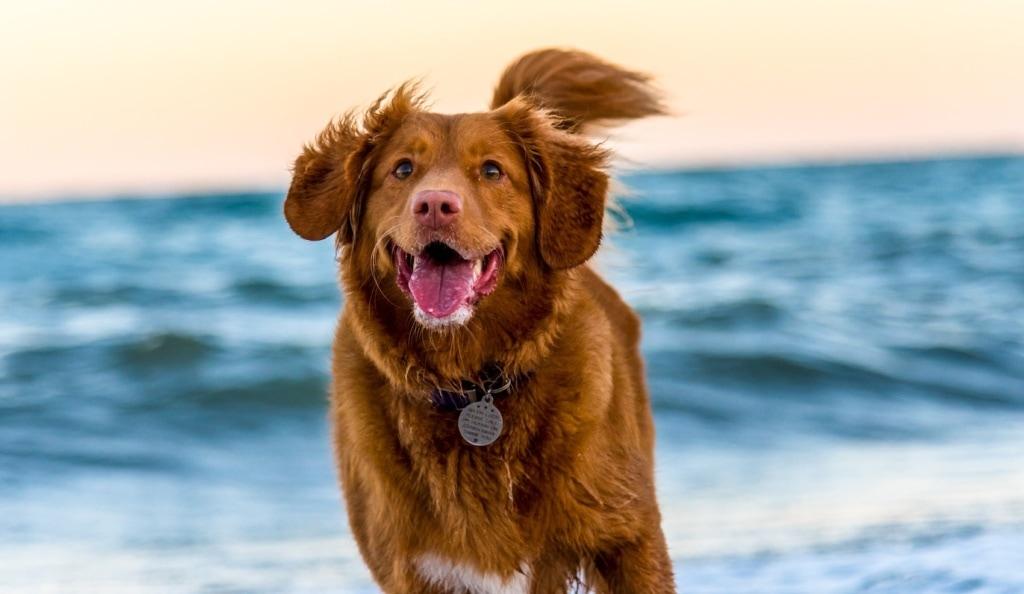 Unterwegs mit dem Vierbeiner: Urlaub mit Hund