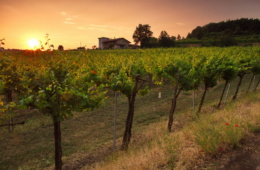 Weingut in Franciacorta