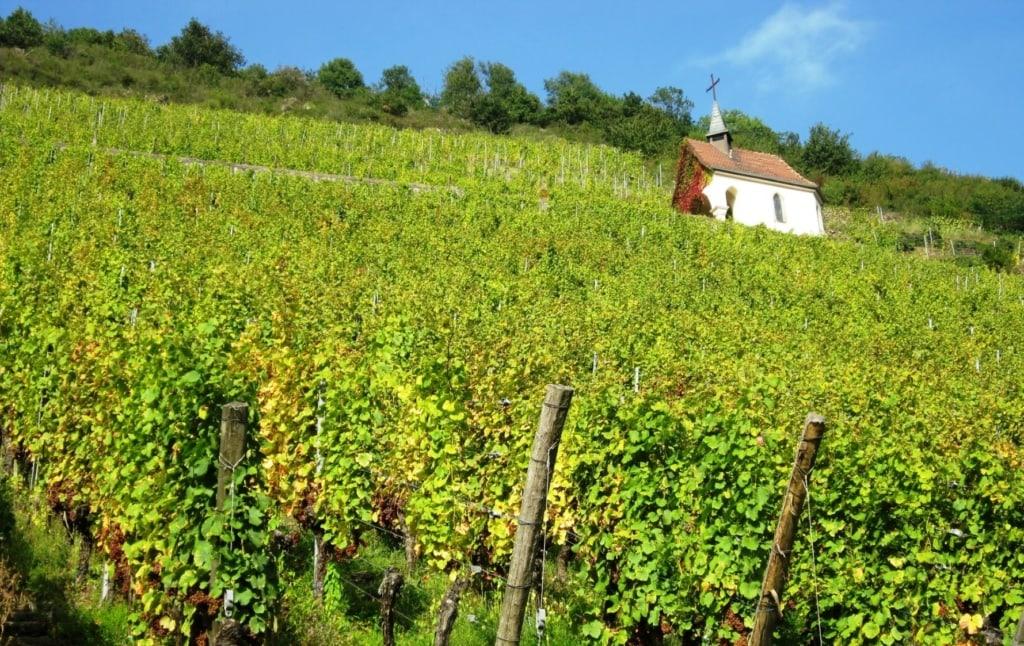 Kleine Kirche an einem Weinhügel im Elsass