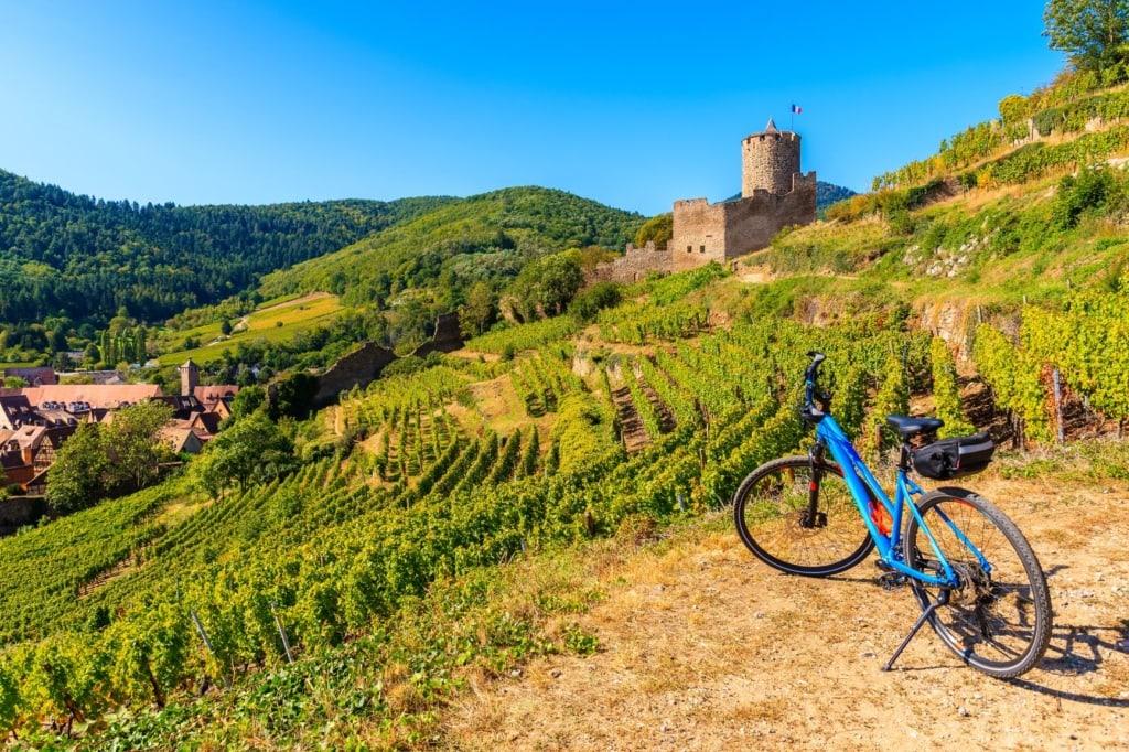 Blaues Fahrrad steht in einem Weinanbaugebiet im Elsass