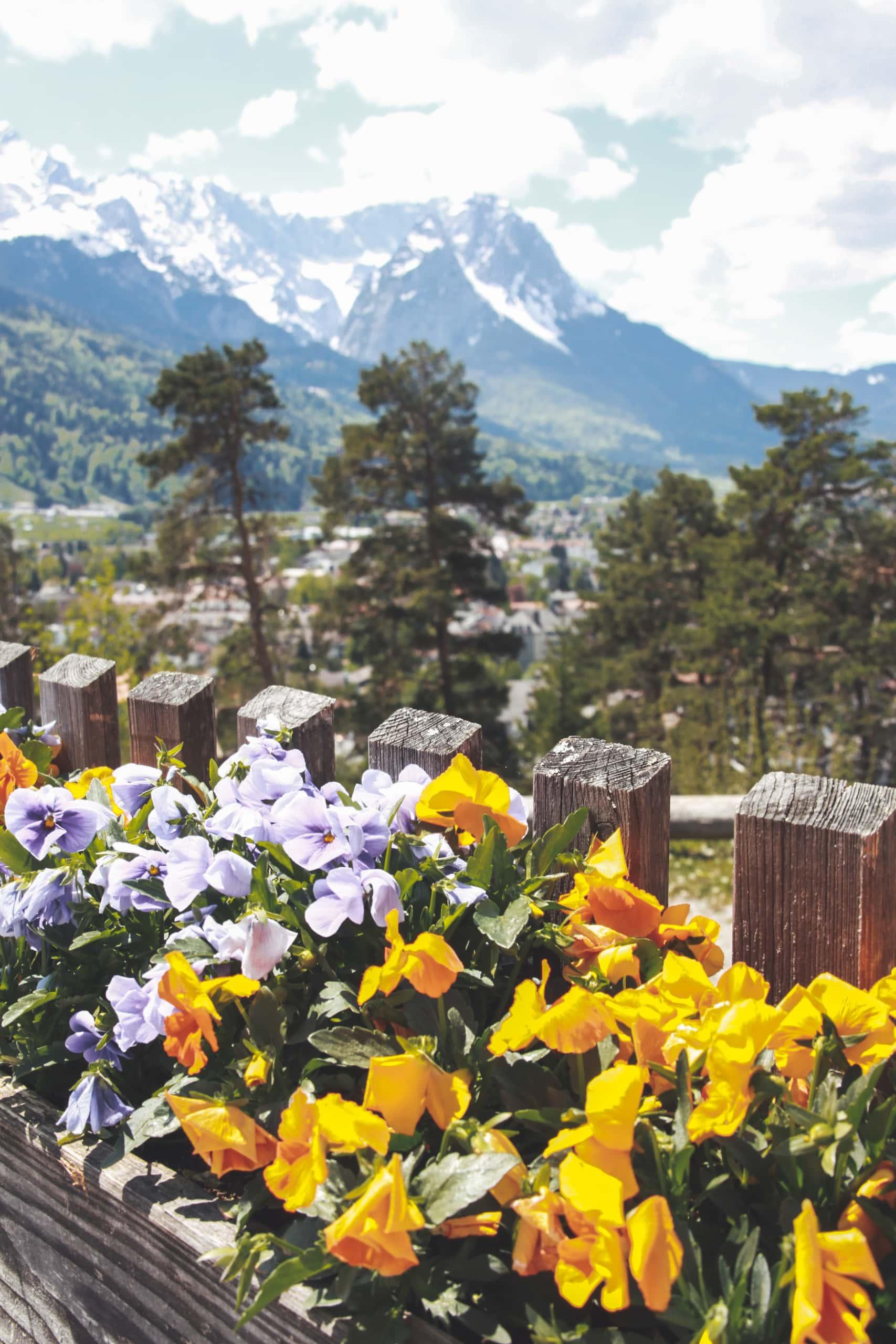 Blumen vor dem Panorama der Garmisch-Partenkirchen Bergwelt