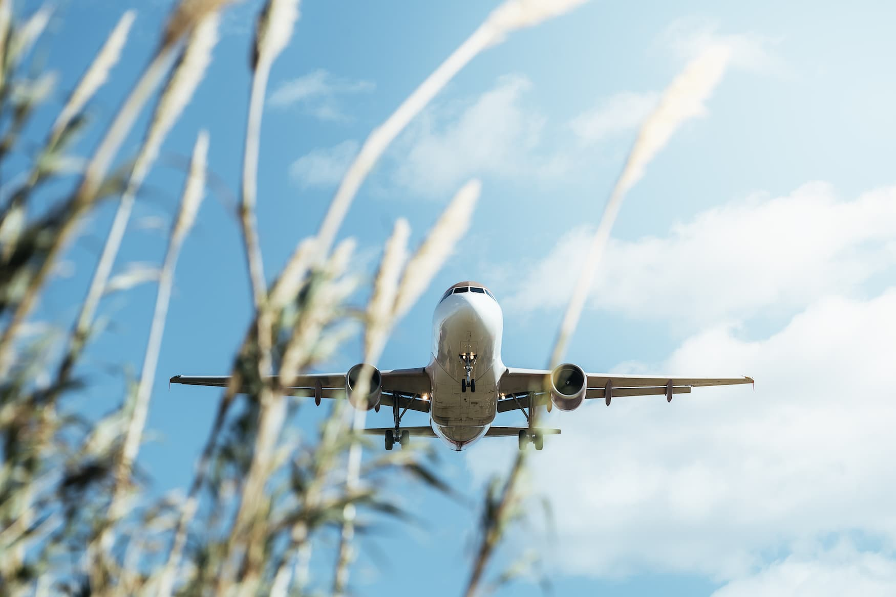 Flugzeug hinter Graswedeln