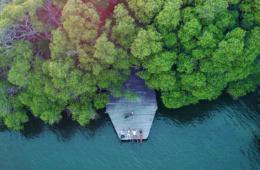 Inspirierend - Pause im Mangrovenwald