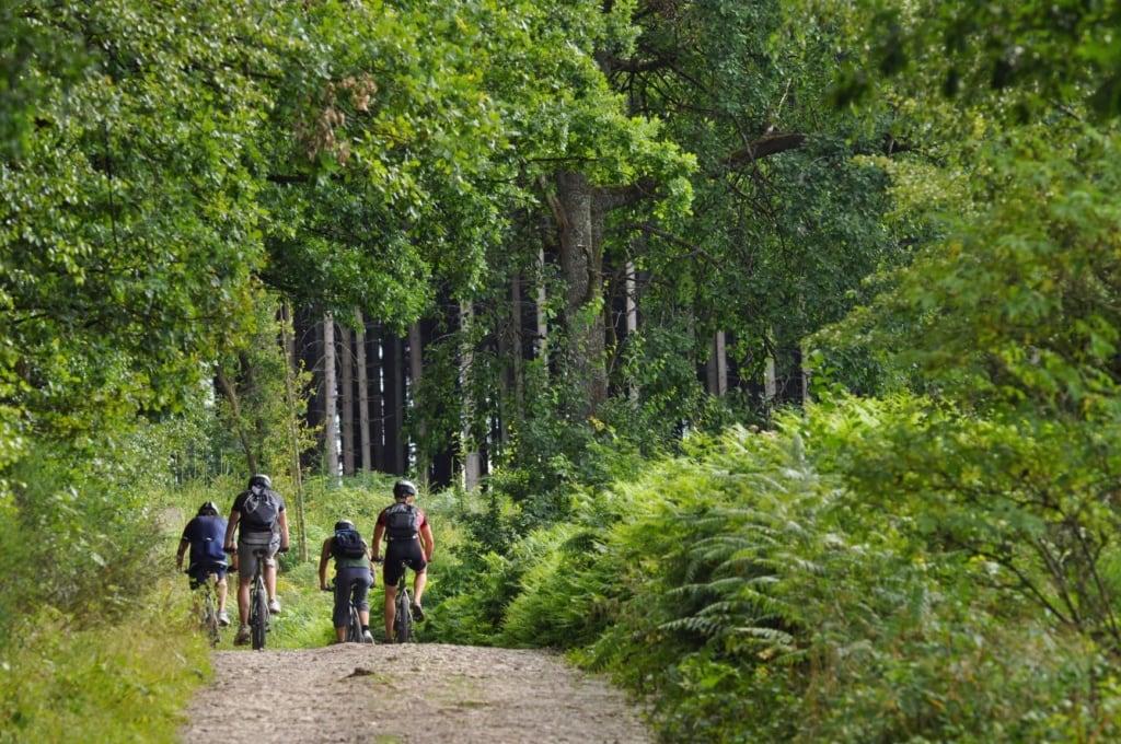 Mountainbiker auf einem Waldweg in den Ardennen in der Wallonie