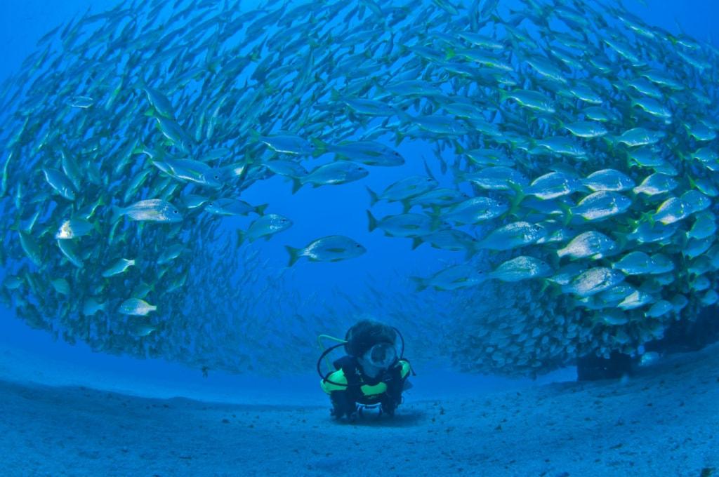 Unterwasseraufnahme von einem taucher