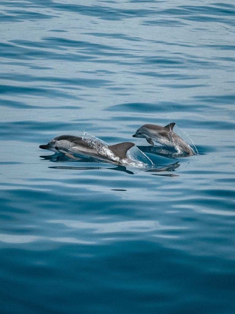 Bei einer Bootstour um die Insel Gran Canaria trifft man gerne mal Delfine.